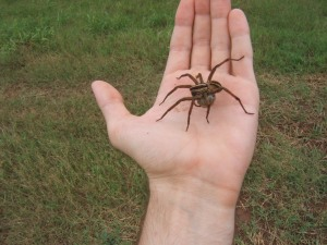 Not my wolf spider. My spider made me sad, so I didn't want to play with him anymore.