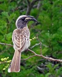 That's a bigger beak.