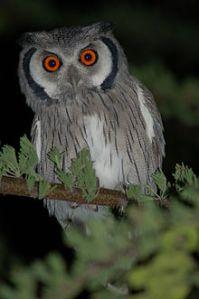 I'm an owl!