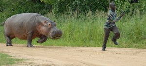 A South African being offered the much coveted Friend of the Hippos award.