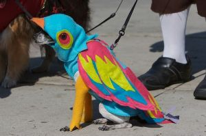 funny-dog-costume-parrot-dog