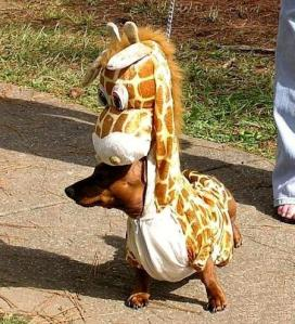 giraffe-wiener-dog