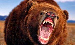 Second prize is an angry bear. Remember not to tie it to your equipment.