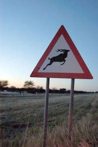 This rare specimen is the only Kudu crossing sign in the country without bullet holes in it. It is, to be fair, only ten minutes old.