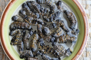 Mopane worm stew goes wonderfully with a nice chardonnay. About three bottles should do the trick...